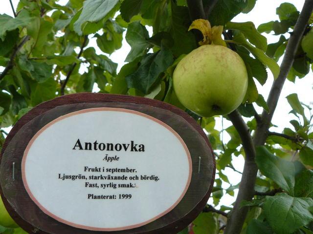 Antonovka