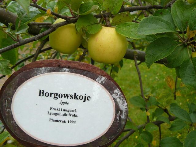 Borgowskoje