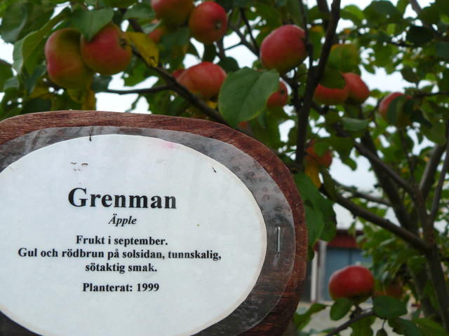 Grenman