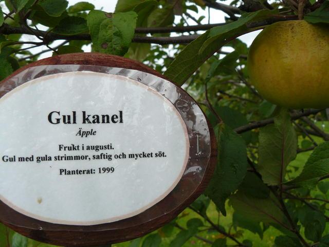 Gul Kanel