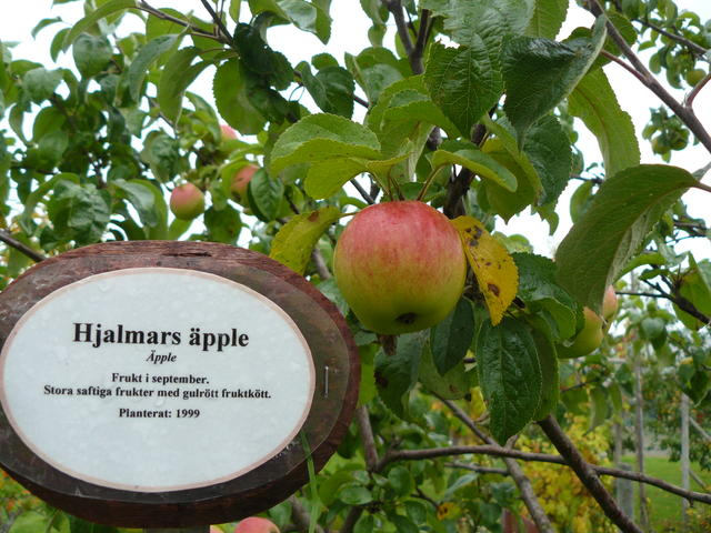 Hjalmars apple