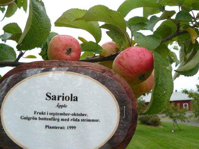 Sariola