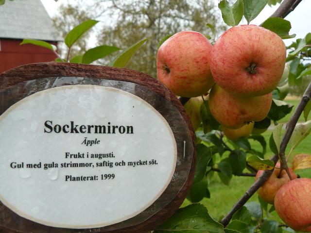 Sockermiron